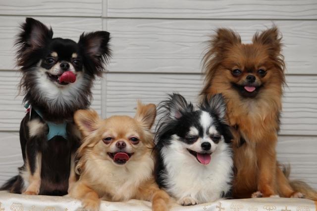 生肉によって犬の体調管理をしやすくなります