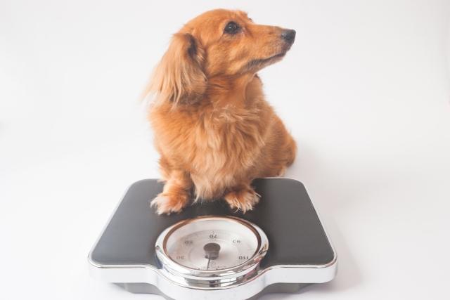 生肉食は犬の体重管理もしやすくなります