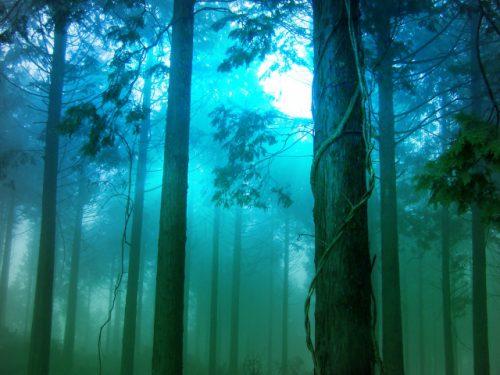 玉置神社~推定樹齢3000年の神代杉と神秘の不思議スポット