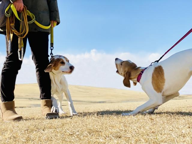 山本卓による犬のしつけ講座の口コミや体験談